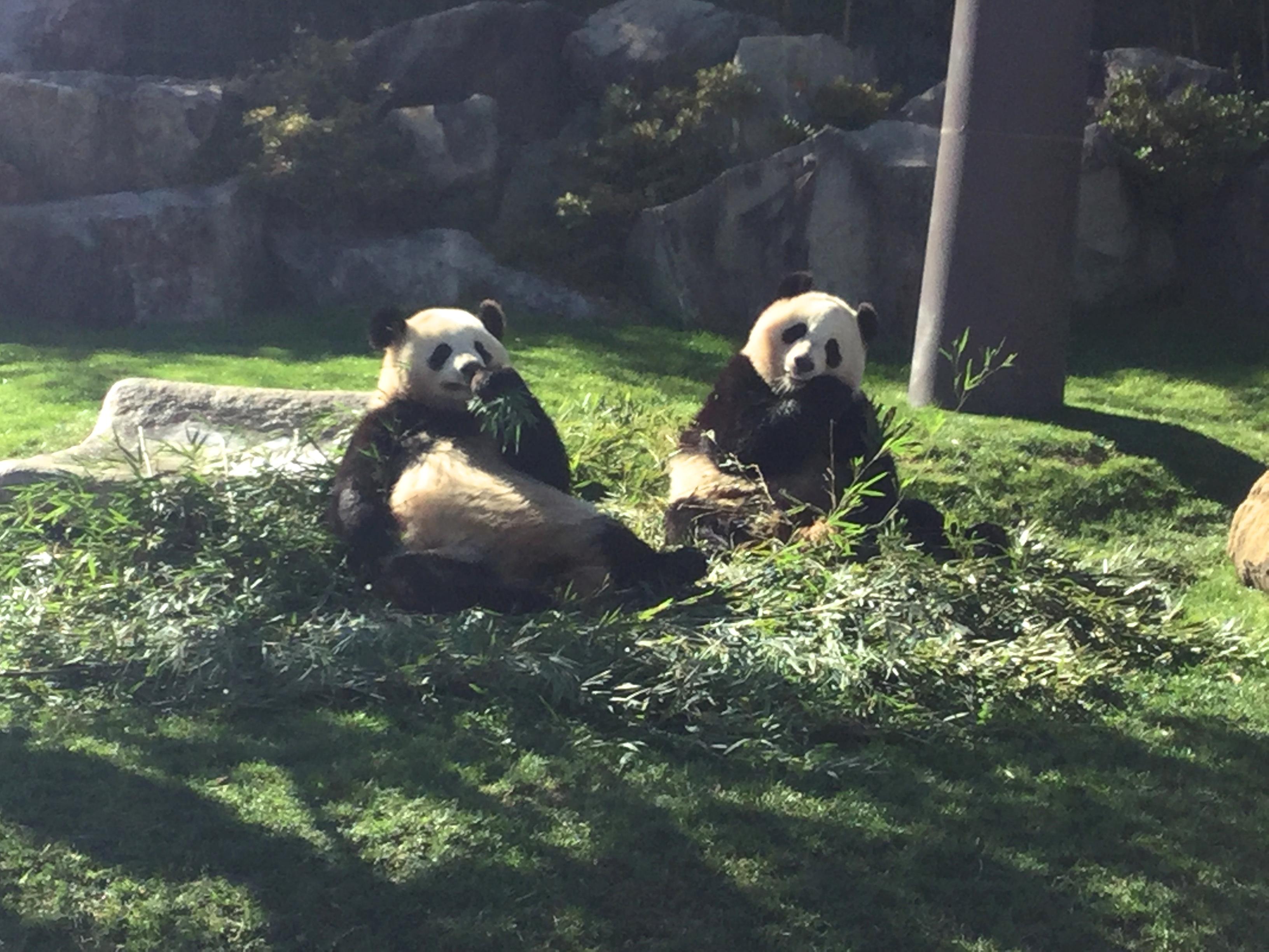 パンダの兄弟